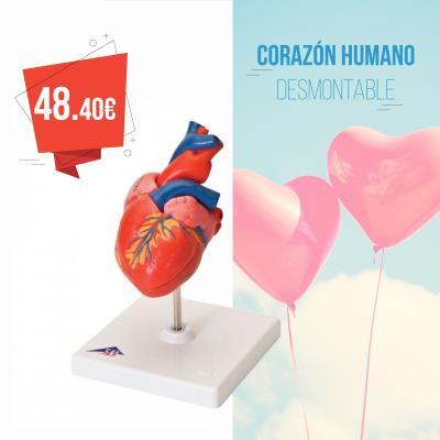 Corazón humano desmontable